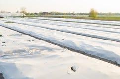 Crecimiento vegetal en el campo Peque?os invernaderos Spunbond dañado Desastre: tornado, huracán Daño a la agricultura helada fotos de archivo