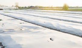 Crecimiento vegetal en el campo Peque?os invernaderos Spunbond da?ado Desastre: tornado, hurac?n Da?o a la agricultura helada imagen de archivo libre de regalías