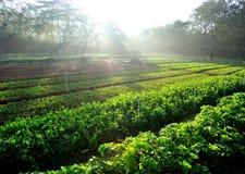 Crecimiento vegetal en el huerto Fotografía de archivo libre de regalías