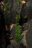 Crecimiento vegetal en la pared de la roca del abismo Imágenes de archivo libres de regalías