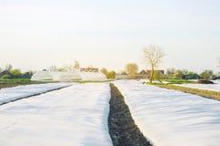 Crecimiento vegetal Peque?os invernaderos Spunbond a proteger contra helada y para guardar la humedad de verduras Argumentos agr? fotos de archivo libres de regalías