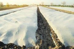 Crecimiento vegetal Spunbond a proteger contra helada y para guardar la humedad de verduras Peque?os invernaderos Argumentos agr? fotografía de archivo libre de regalías
