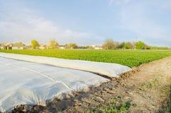 Crecimiento vegetal Spunbond a proteger contra helada y para guardar la humedad de verduras Peque?os invernaderos Argumentos agr? imagen de archivo