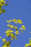 Crecimiento verde Foto de archivo libre de regalías