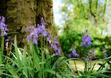 Crecimiento visto campanillas majestuosas de la primavera alrededor de un árbol vertical Fotos de archivo libres de regalías