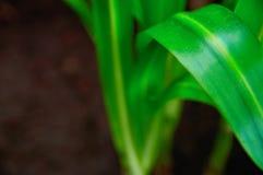 Crecimiento y frescura del concepto La planta verde de largo extendida se va verde claro en el primer oscuro del fondo Foco selec Imagenes de archivo