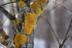 Crecimientos en los árboles adorables fotografía de archivo