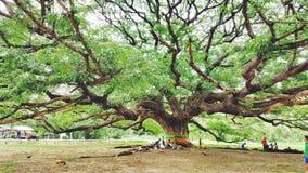 Credi l'albero Fotografia Stock