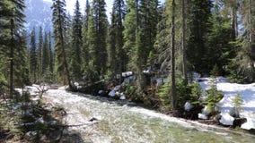 The Creek в лесе акции видеоматериалы