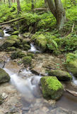 Creek. And stones in forest Stock Images