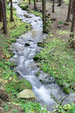 Creek. And stones in forest Royalty Free Stock Photos