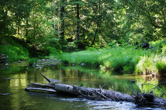 A creek. A wood a peace landscape Royalty Free Stock Images