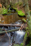Creek. In the national park Sumava-Czech Republic Royalty Free Stock Photography