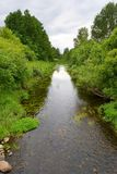 Creek. In a summer forest Royalty Free Stock Photo