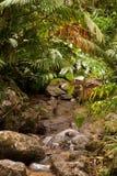 Creek. Jungle creek, North Queensland, Australia Stock Image