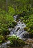 creek Obrazy Royalty Free
