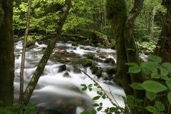 Creek Royalty Free Stock Photography