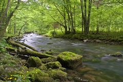 Creek Royalty Free Stock Photography