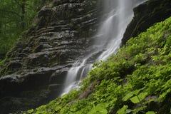 creek Obraz Stock