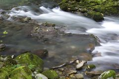 Creek Royalty Free Stock Photo