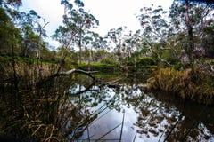 creek fotografering för bildbyråer