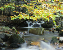Creek. Autumn creek stock image