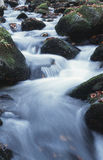 Creek. Mountain creek royalty free stock image