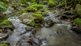 creek Arkivfoton