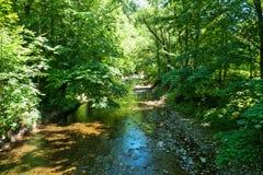 creek Royaltyfri Bild