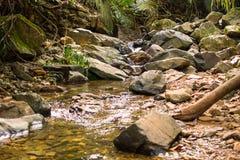 creek fotos de stock royalty free