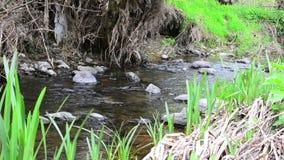creek stock video