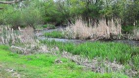 creek lager videofilmer
