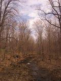 creek royaltyfria foton