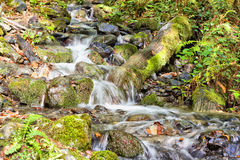 creek Fotografia de Stock Royalty Free