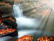Creek. Mountain creek in the national park Sumava-Czech Republic Stock Image