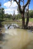 creek. obraz stock