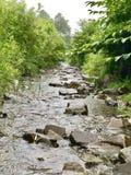 creek Arkivbild