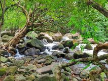 creek foto de stock royalty free