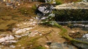 creek video estoque
