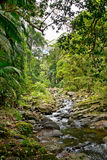 Creek in Australia forest Stock Photography