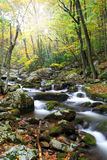 Creek during Autumn Royalty Free Stock Image