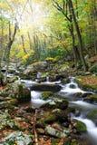 Creek during Autumn Royalty Free Stock Image
