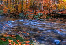 Creek In Autumn. Indian Run Creek, Pennsylvania in Autumn royalty free stock photos