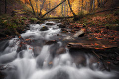 Creek at autumn forest Royalty Free Stock Image