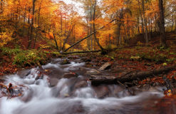 Creek at autumn forest Stock Photography