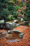 Creek in Autumn Forest Stock Photo