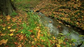 Creek in autumn forest. Full HD with motorized slider. 1080p. Creek in autumn forest with green grass and fallen leaves. Full HD with motorized slider. 1080p stock footage