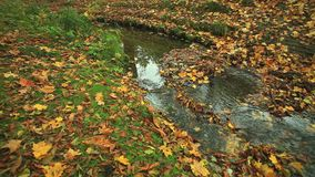 Creek in autumn forest. Full HD with motorized slider. 1080p. Creek in autumn forest with green grass and fallen leaves . Full HD with motorized slider. 1080p stock video footage