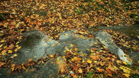 Creek in autumn forest. Full HD with motorized slider. 1080p. stock footage