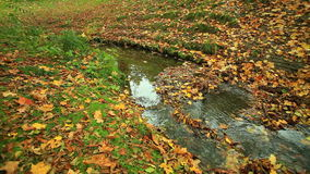 Creek in autumn forest. Full HD with motorized slider. 1080p. stock video